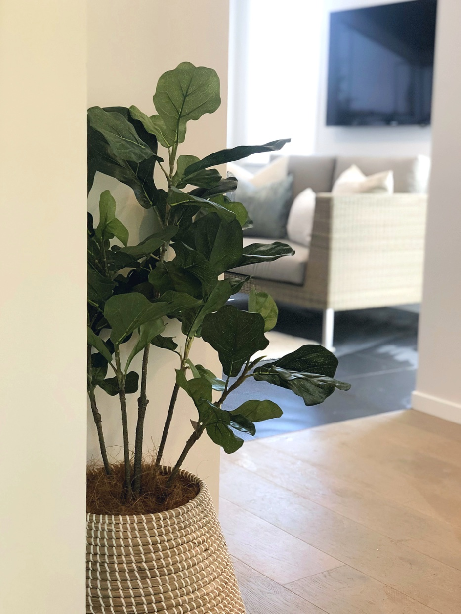 plant in woven basket on wood floors